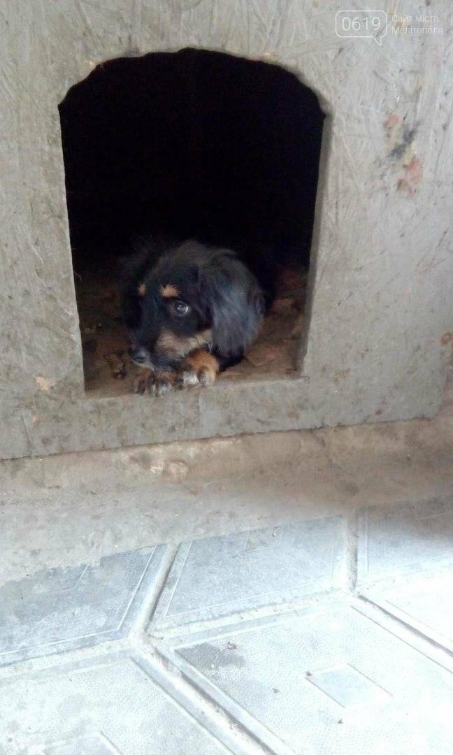 Игривый щенок ждет своего хозяина , фото-2
