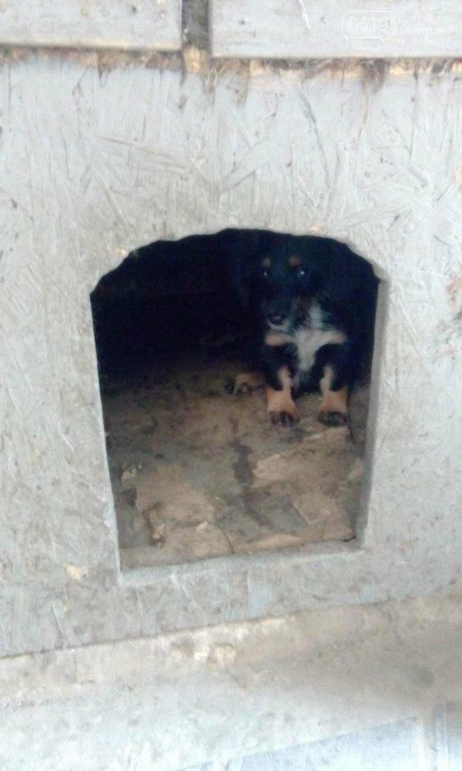 Игривый щенок ждет своего хозяина , фото-1