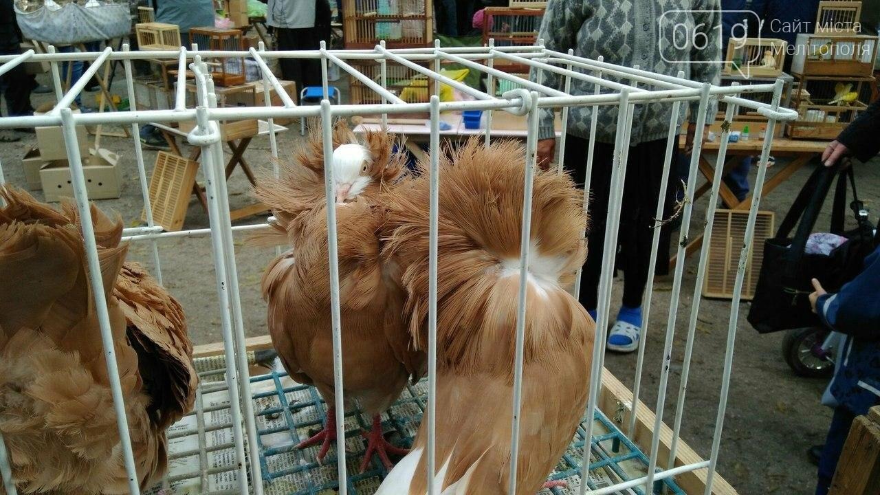 На выставке-ярмарке голубей и декоративных птиц было интересно и многолюдно. Фоторепортаж, фото-2
