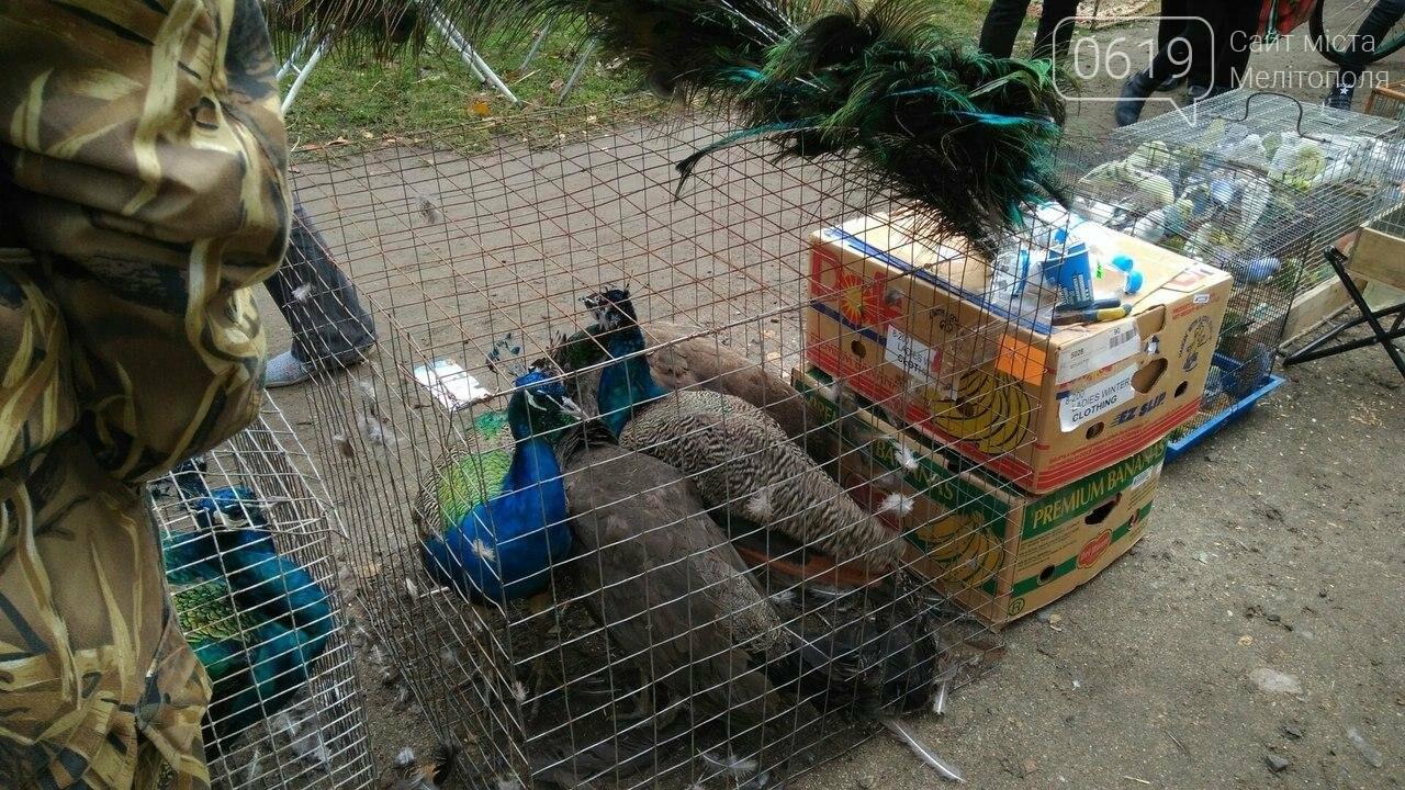 На выставке-ярмарке голубей и декоративных птиц было интересно и многолюдно. Фоторепортаж, фото-4