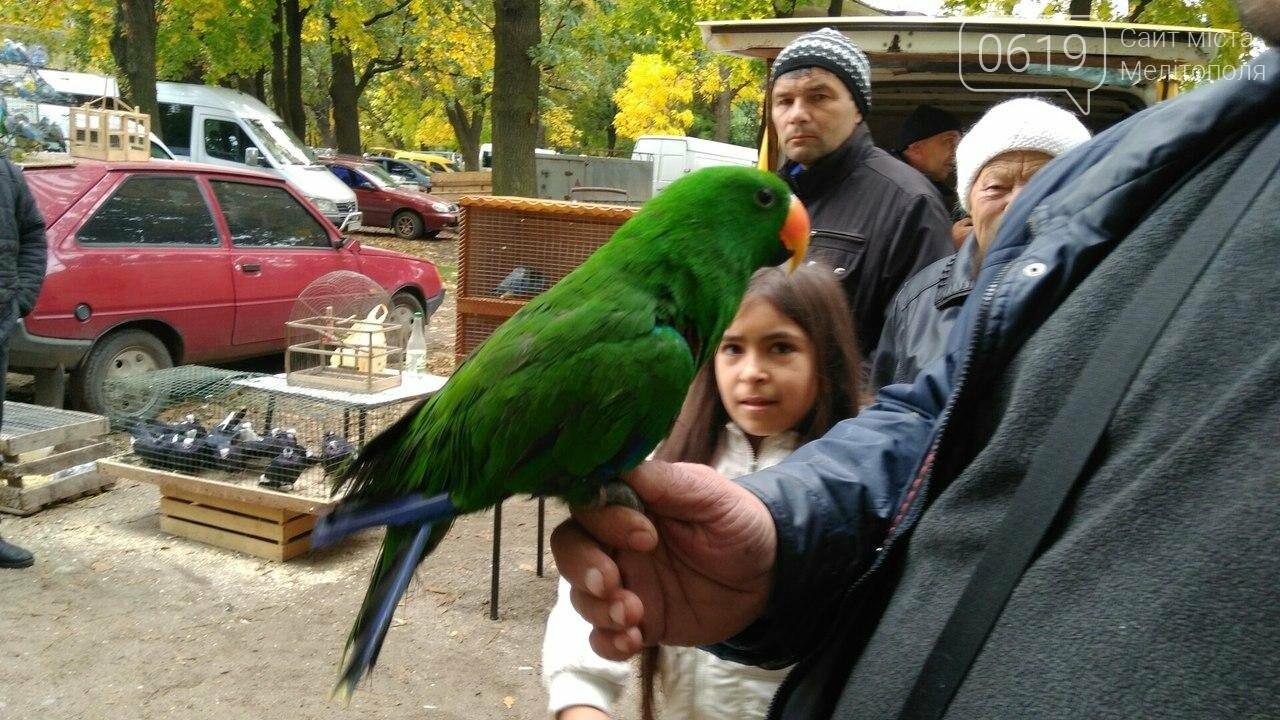 На выставке-ярмарке голубей и декоративных птиц было интересно и многолюдно. Фоторепортаж, фото-6