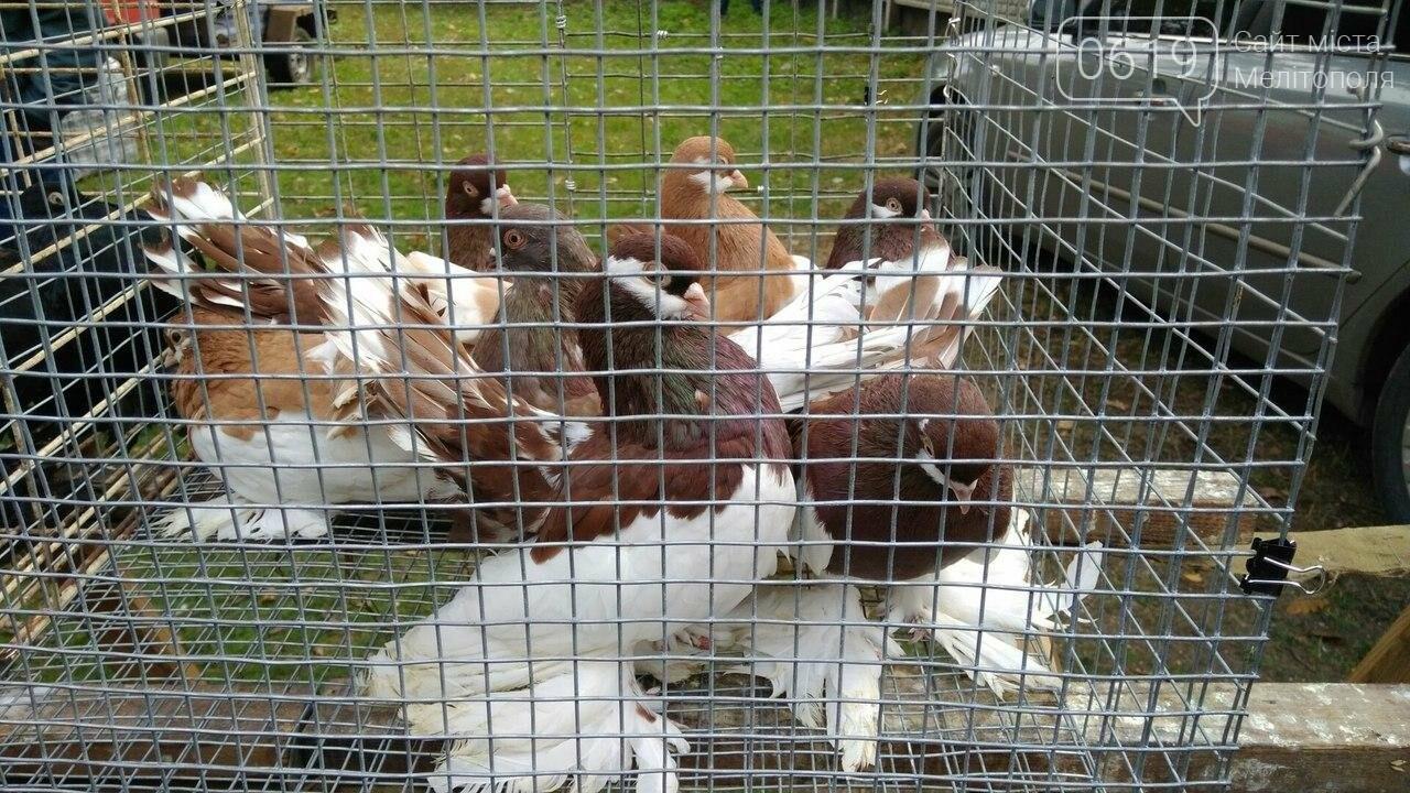 На выставке-ярмарке голубей и декоративных птиц было интересно и многолюдно. Фоторепортаж, фото-13