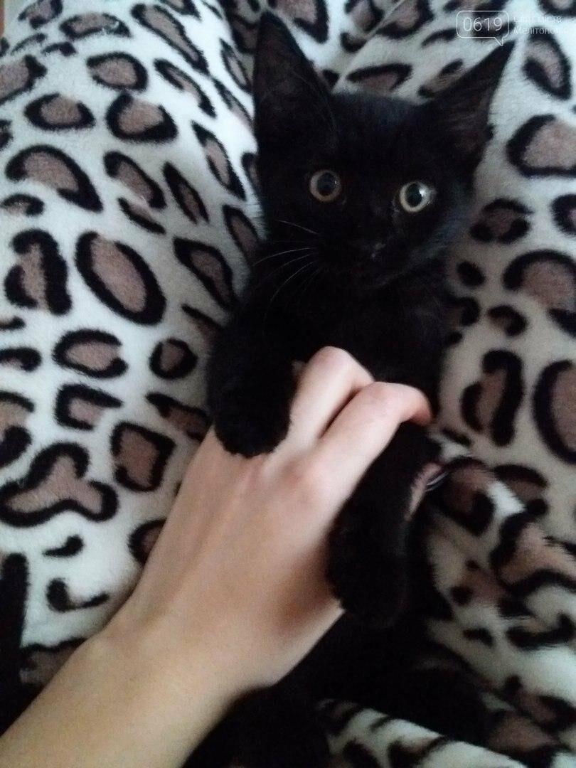 Милые котята нуждаются в доме , фото-2