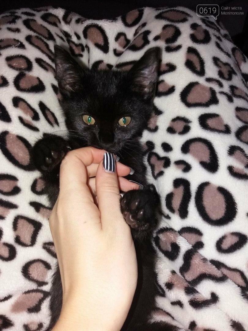 Милые котята нуждаются в доме , фото-3