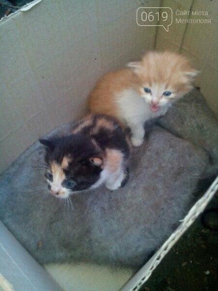 Двое малышей нуждаются в доме, фото-1