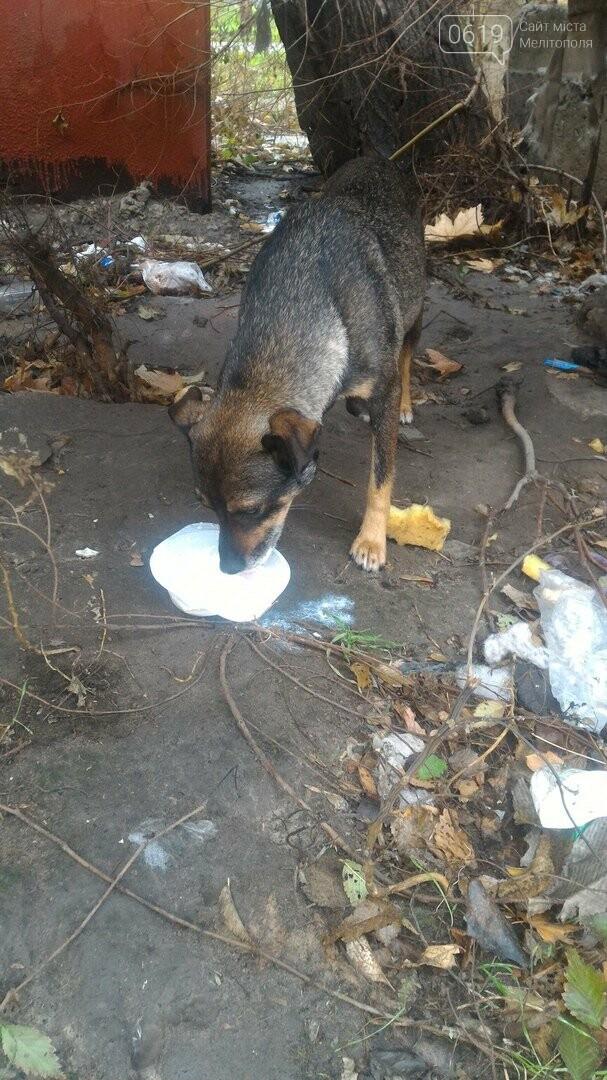 Спасите маленьких животных от голодной смерти , фото-1