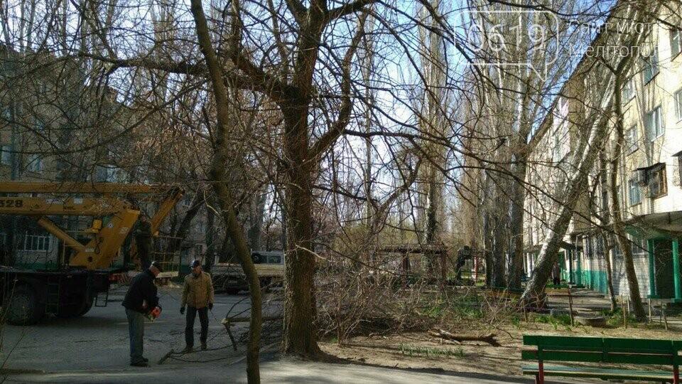 В Мелитополе коммунальщики убирают упавший тополь , фото-2, Фото 0619