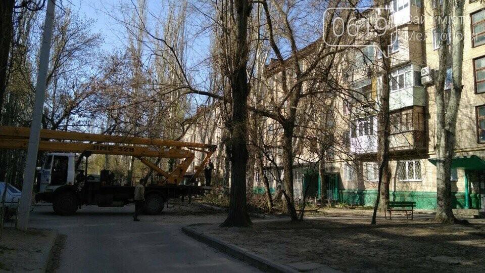 В Мелитополе коммунальщики убирают упавший тополь , фото-1, Фото 0619