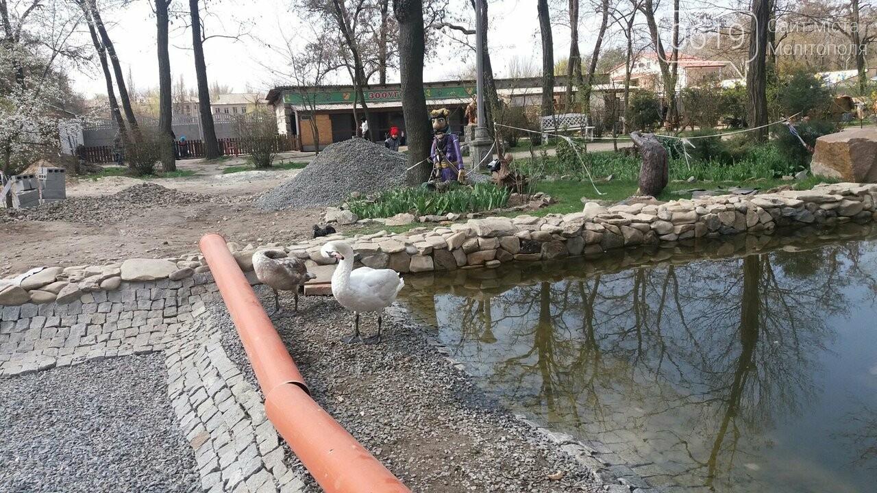 В мелитопольском парке пара молодых лебедей готовится переехать на новый пруд, фото-2, Фото сайта 0619