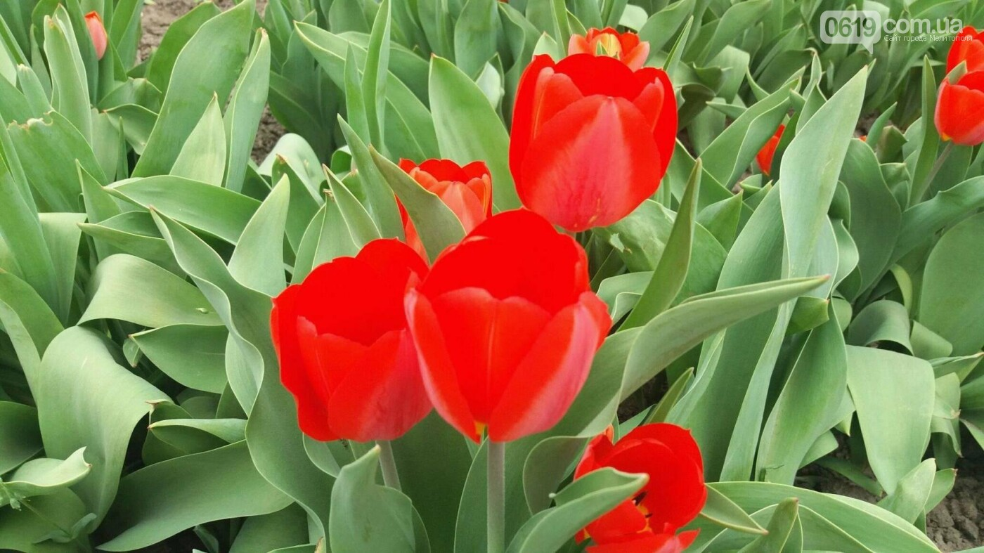 В центре Мелитополя появилась цветочная фотозона, фото-2