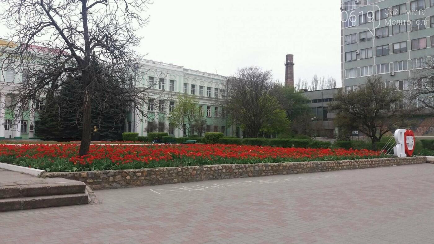 В центре Мелитополя появилась цветочная фотозона, фото-4
