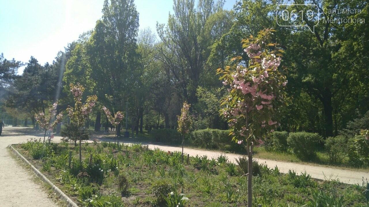 В мелитопольском парке зацвела сакура, фото-2