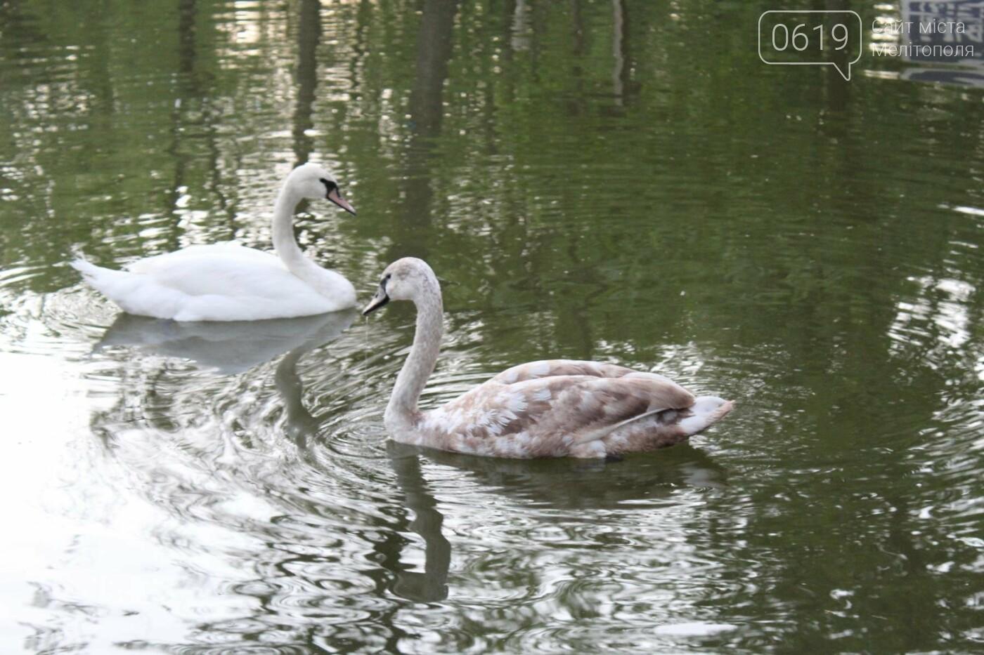 На торжественное открытие пруда в мелитопольском парке собрались сотни горожан, фото-2