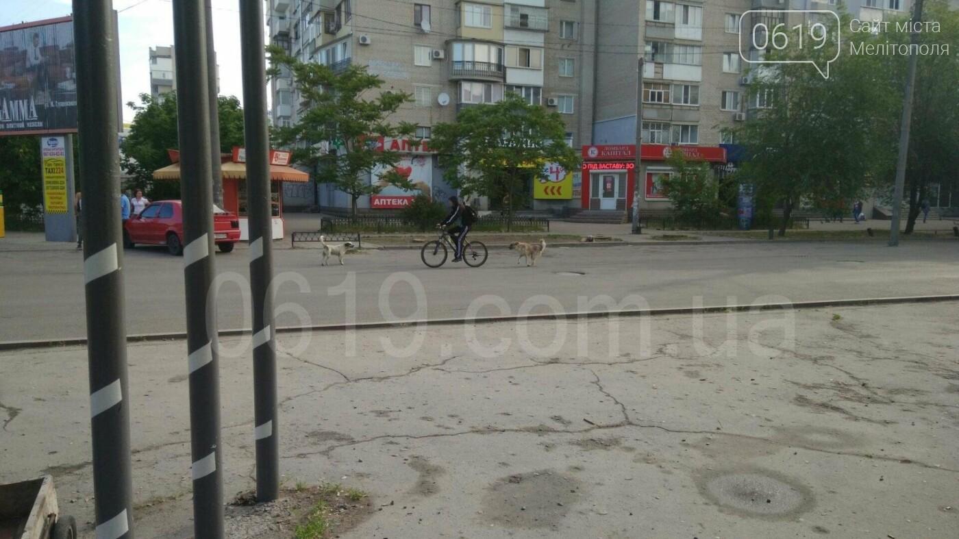 В Мелитополе собаки снова нападают на людей, - ФОТО, фото-1