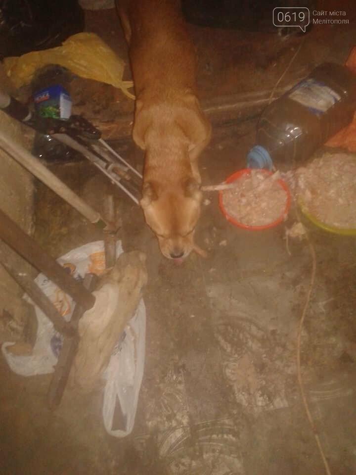 В Мелитополе хозяева заперли в доме собак без еды и воды, а сами уехали, фото-1