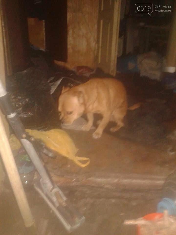 В Мелитополе хозяева заперли в доме собак без еды и воды, а сами уехали, фото-2