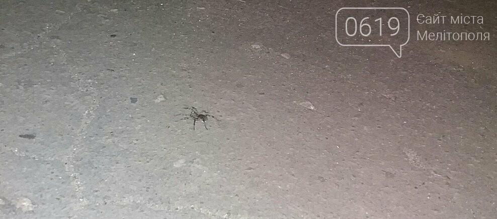 Северную часть Мелитополя оккупировали тарантулы, - ФОТО, фото-2, Фото сайта 0619