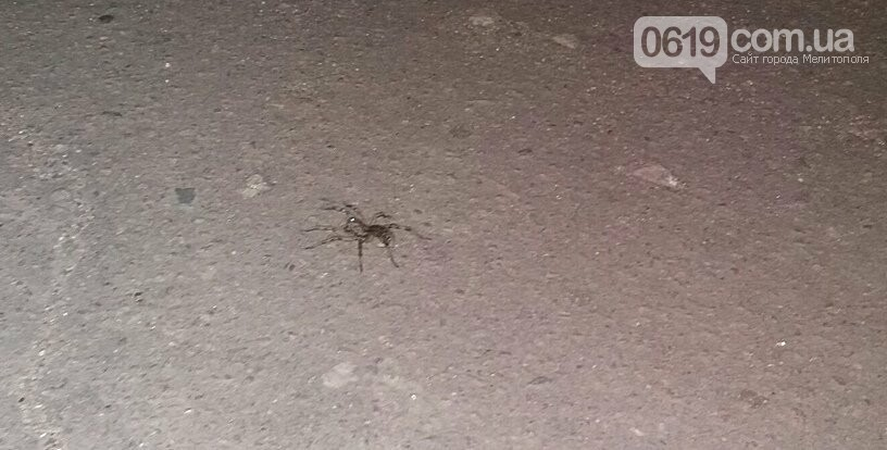 Северную часть Мелитополя оккупировали тарантулы, - ФОТО, фото-3, Фото сайта 0619
