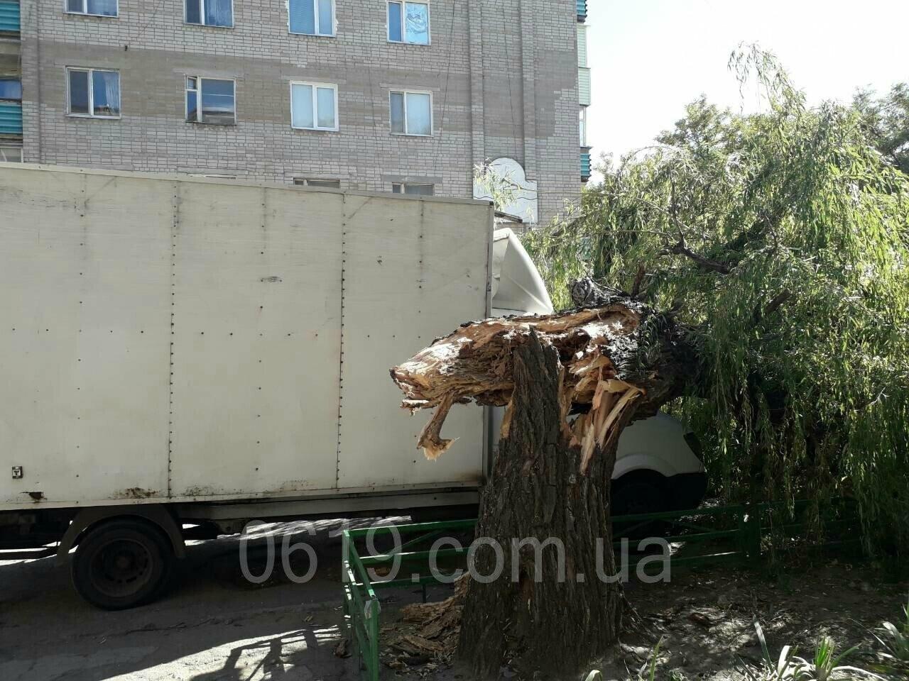 """В Мелитополе огромная ива рухнула на припаркованную рядом """"Газель"""", - ФОТО, фото-2"""
