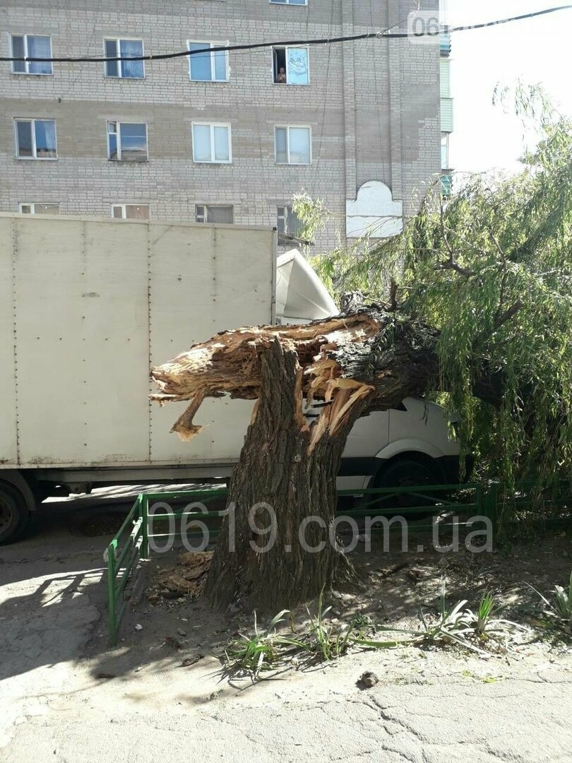 """В Мелитополе огромная ива рухнула на припаркованную рядом """"Газель"""", - ФОТО, фото-1"""