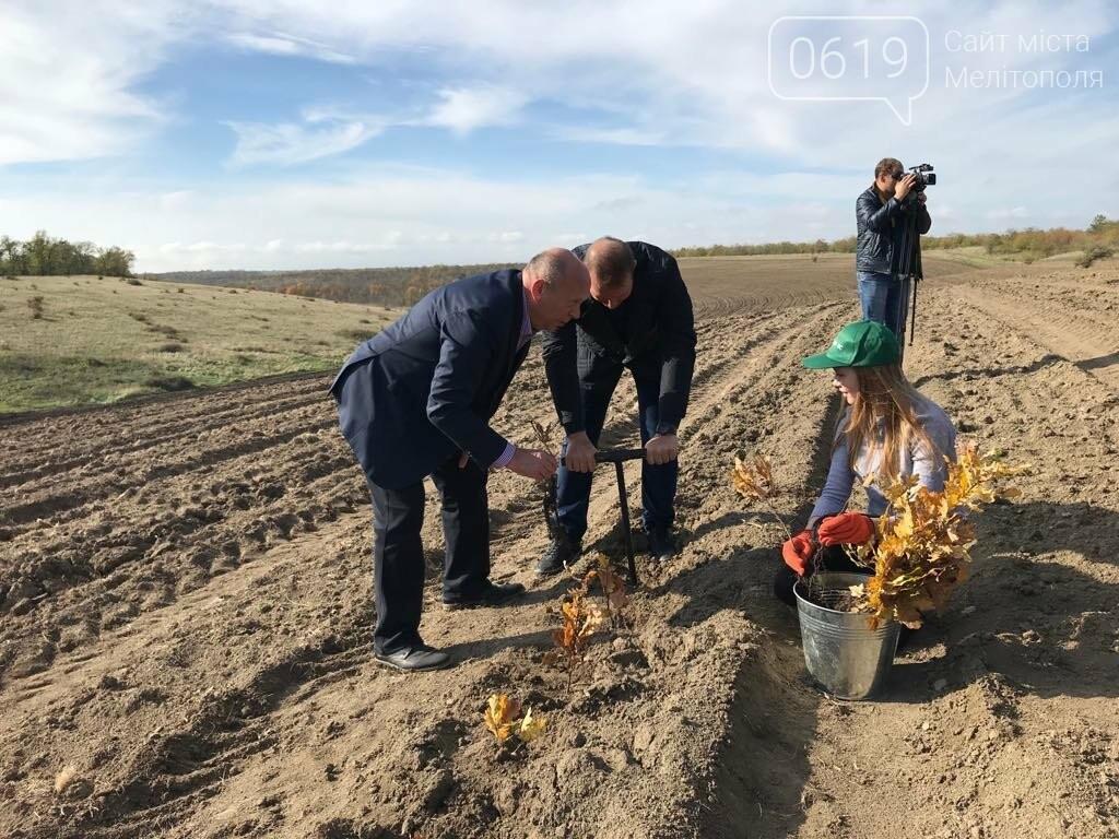 В Мелитопольском районе высадили 5 гектаров леса, фото-3
