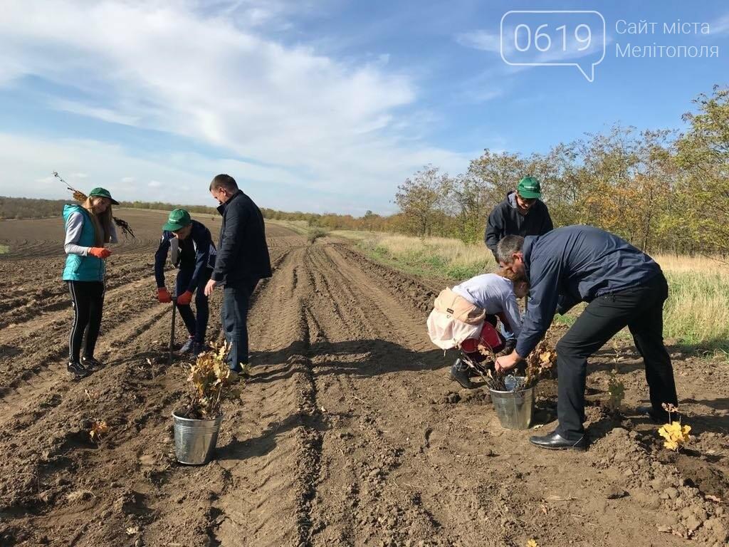 В Мелитопольском районе высадили 5 гектаров леса, фото-4