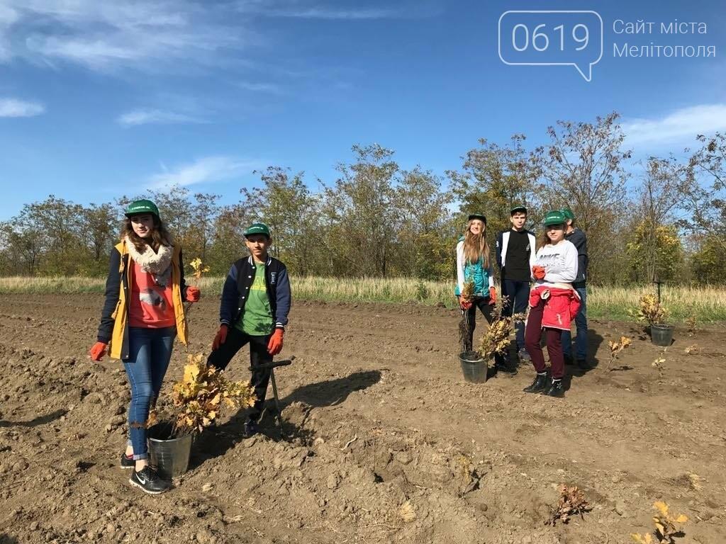 В Мелитопольском районе высадили 5 гектаров леса, фото-5