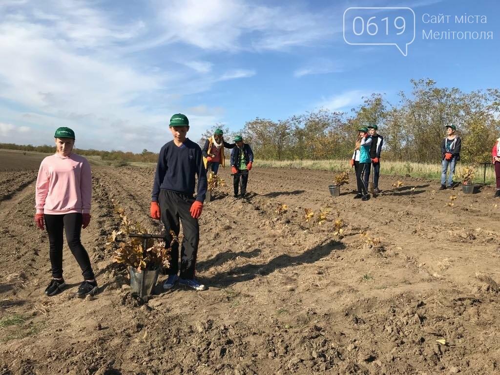 В Мелитопольском районе высадили 5 гектаров леса, фото-6