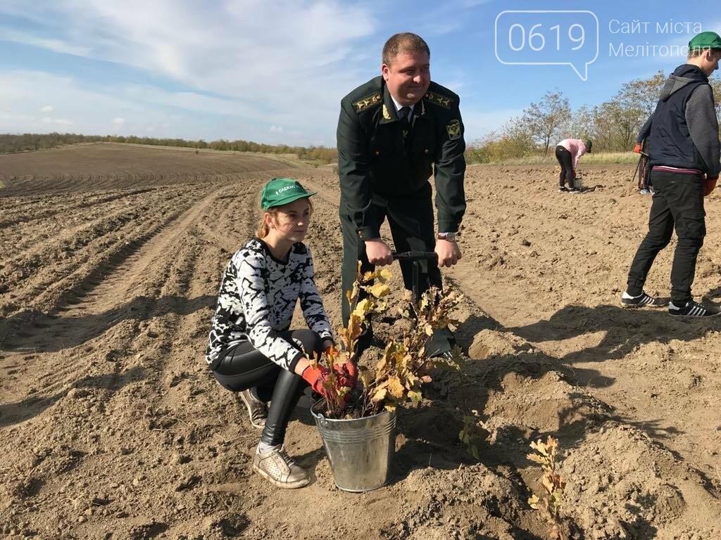В Мелитопольском районе высадили 5 гектаров леса, фото-8
