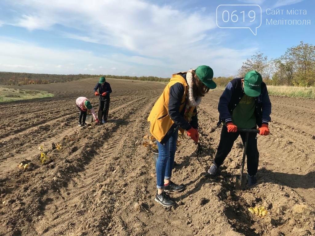 В Мелитопольском районе высадили 5 гектаров леса, фото-9