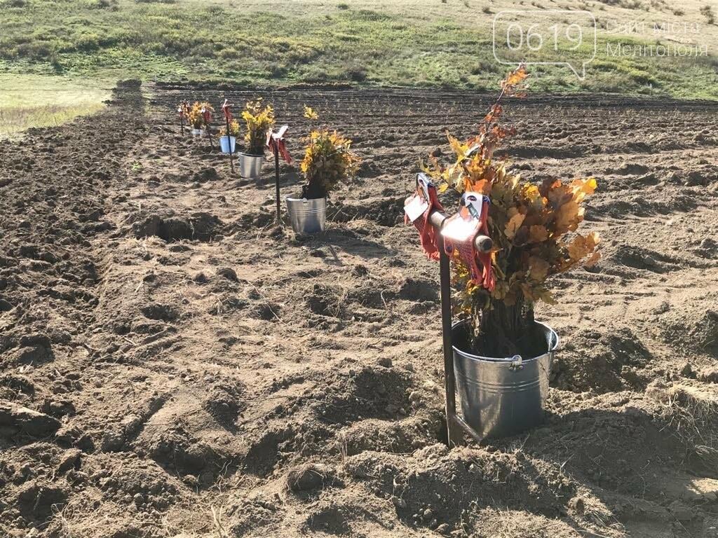 В Мелитопольском районе высадили 5 гектаров леса, фото-18