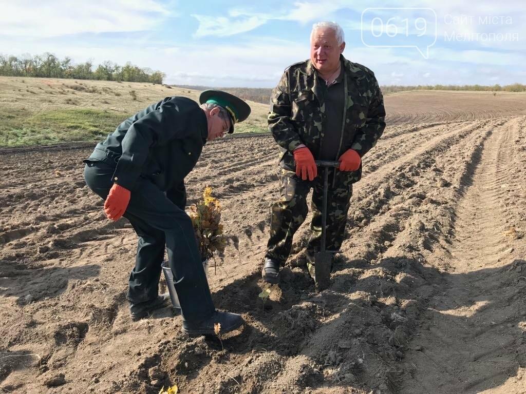 В Мелитопольском районе высадили 5 гектаров леса, фото-12
