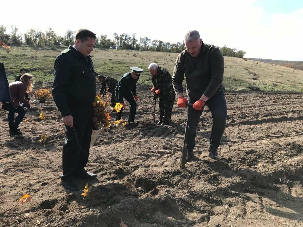 В Мелитопольском районе высадили 5 гектаров леса, фото-13