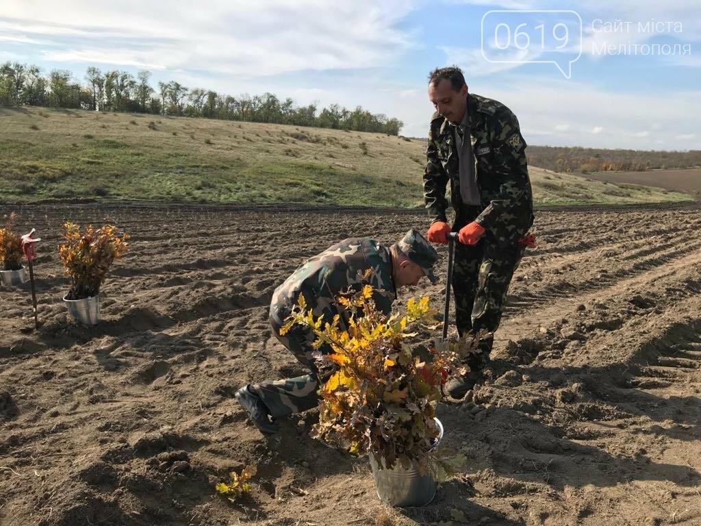 В Мелитопольском районе высадили 5 гектаров леса, фото-14