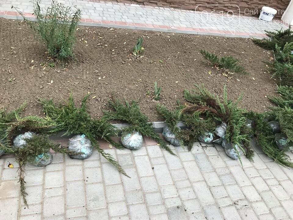 Вокруг мелитопольского стадиона высадили более сотни деревьев, фото-6