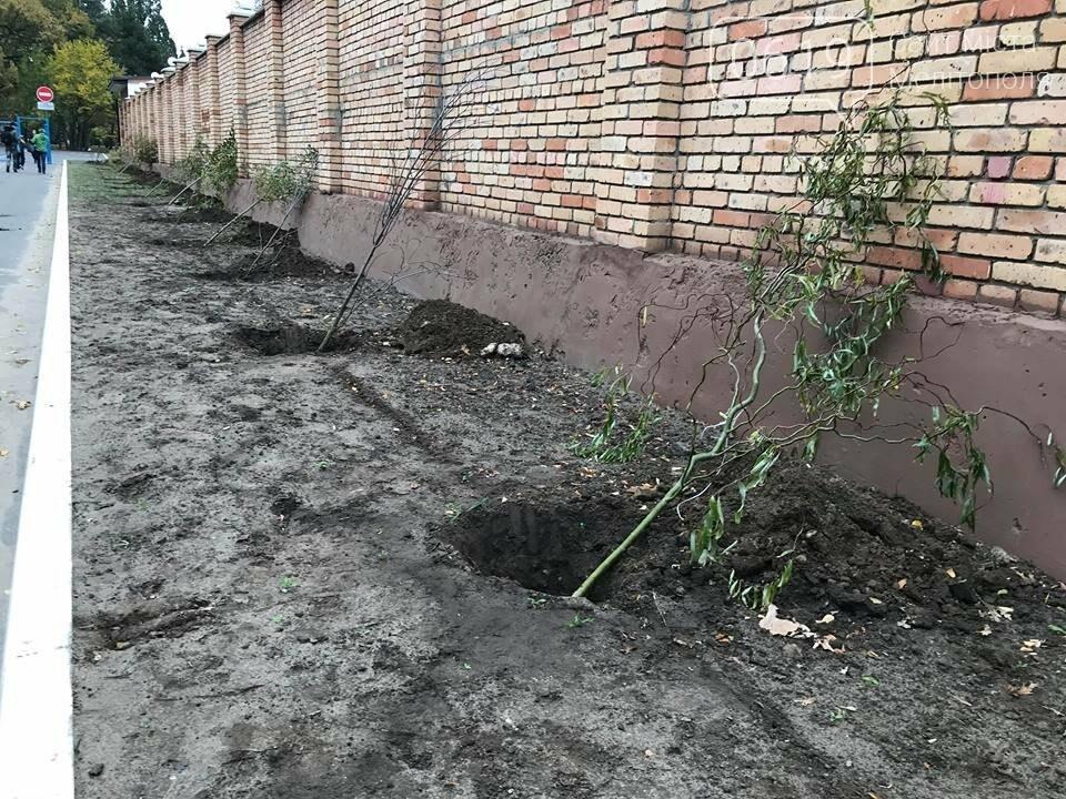 Вокруг мелитопольского стадиона высадили более сотни деревьев, фото-1