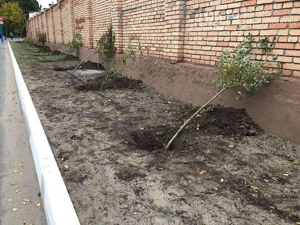Вокруг мелитопольского стадиона высадили более сотни деревьев, фото-7