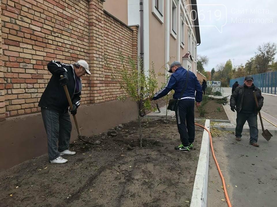Вокруг мелитопольского стадиона высадили более сотни деревьев, фото-4