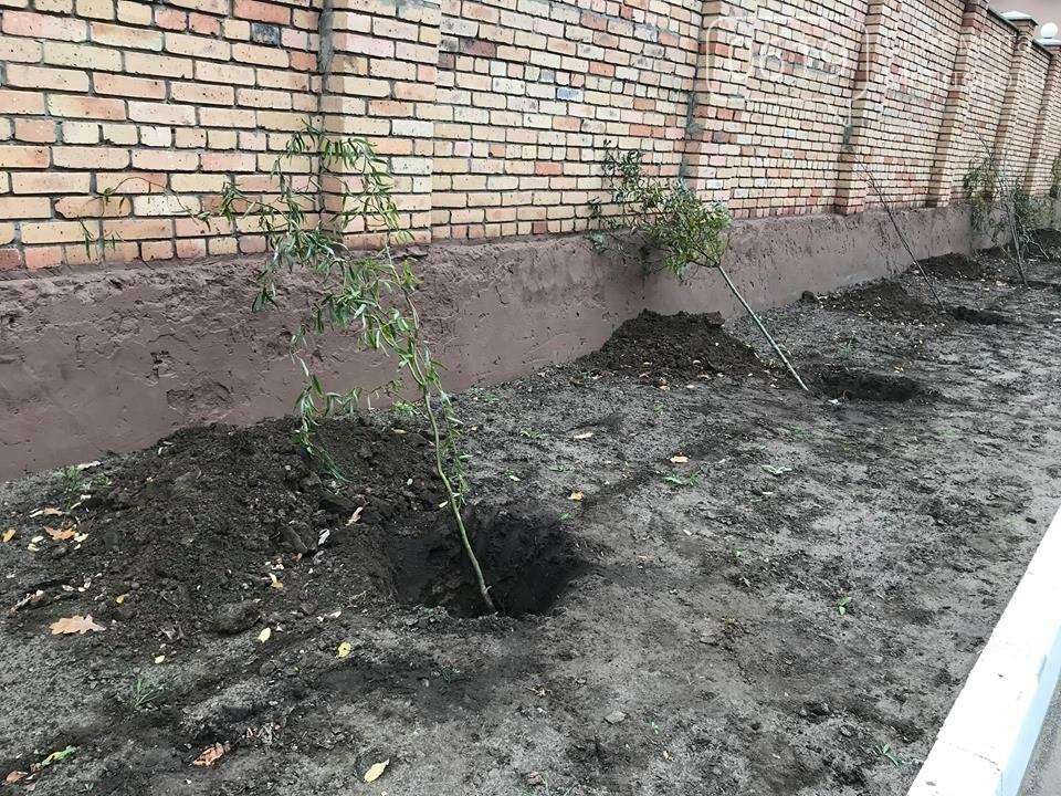 Вокруг мелитопольского стадиона высадили более сотни деревьев, фото-8