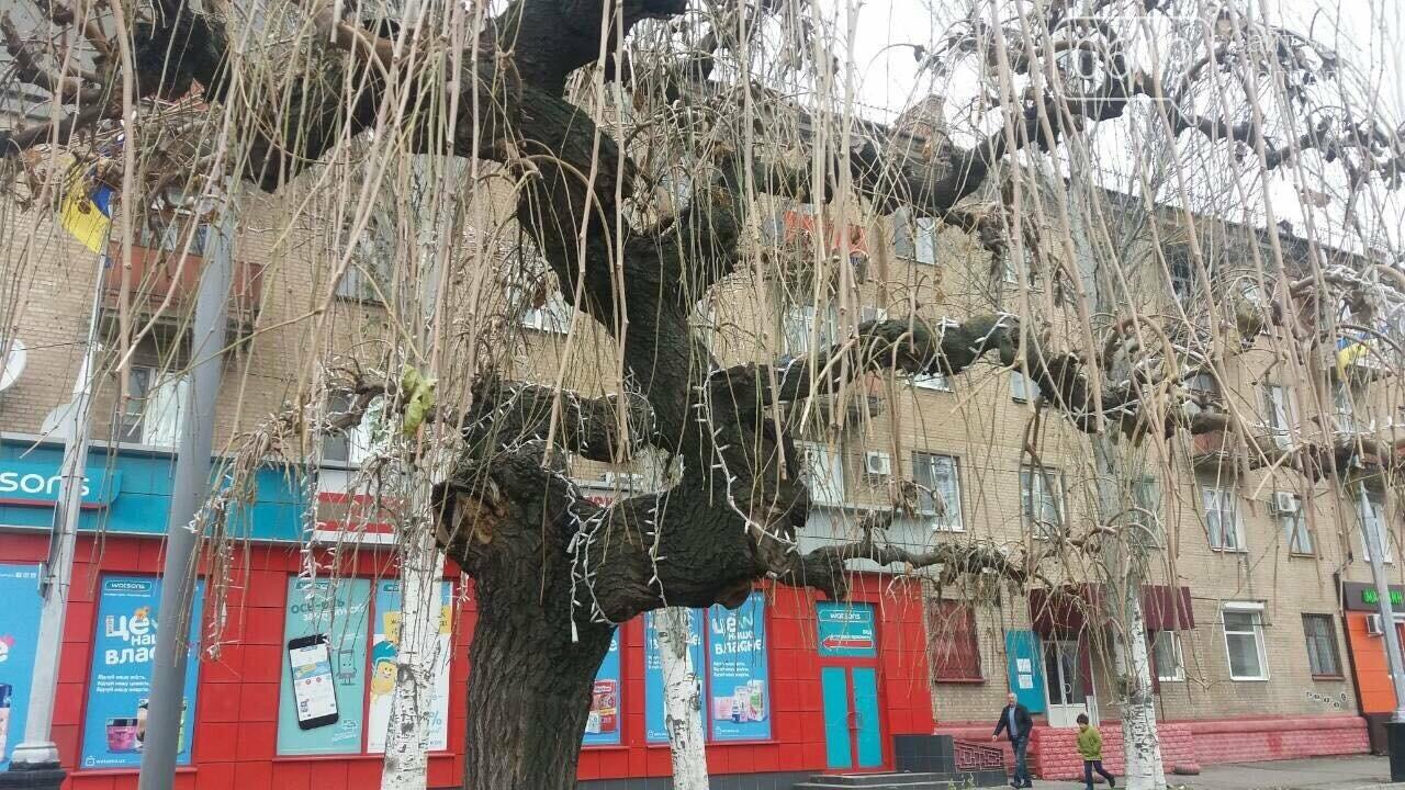 В Мелитополе монтируют новогодние иллюминации, фото-3, Фото сайта 0619