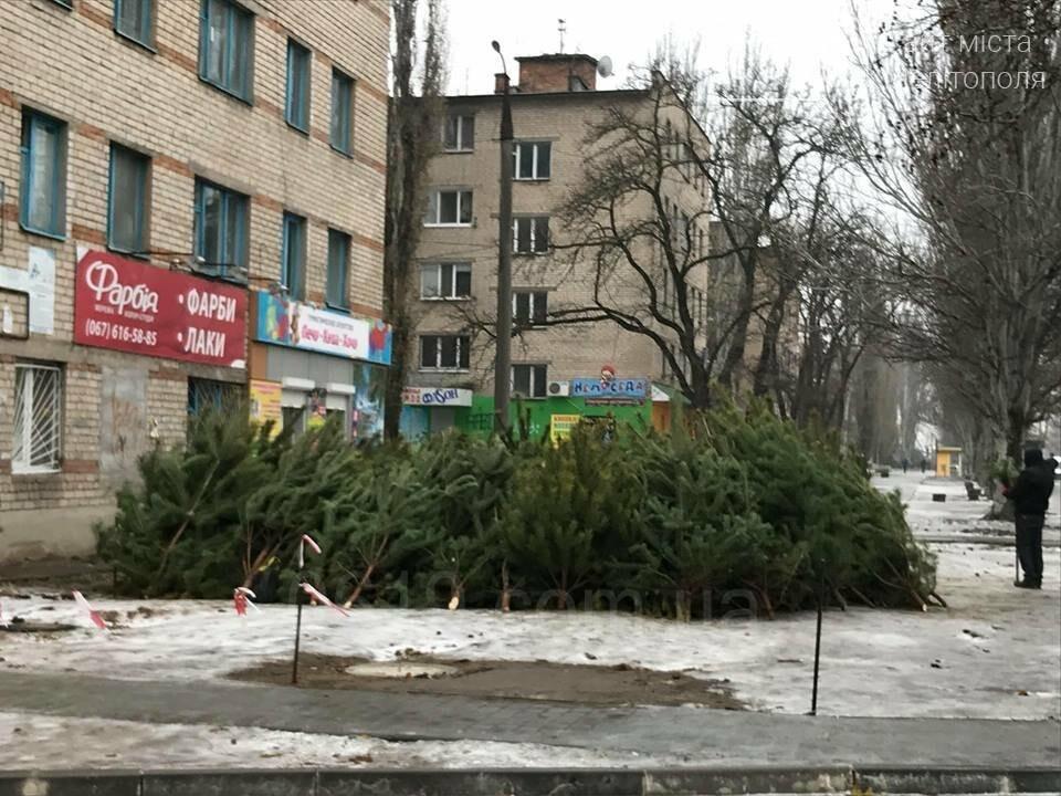 В Мелитополе начали продавать первые елки , фото-3