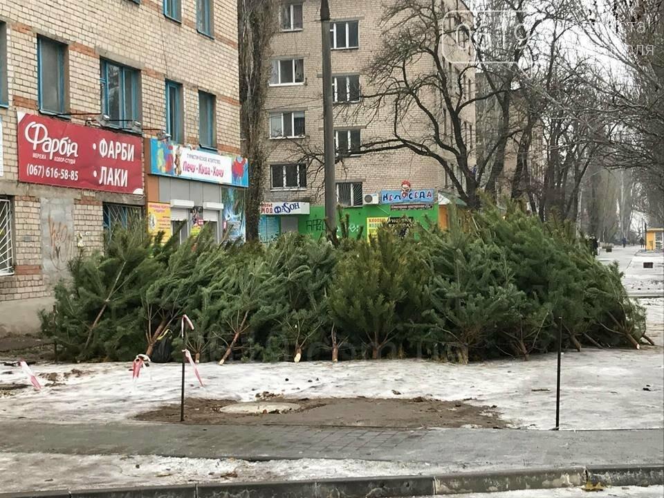 В Мелитополе начали продавать первые елки , фото-2