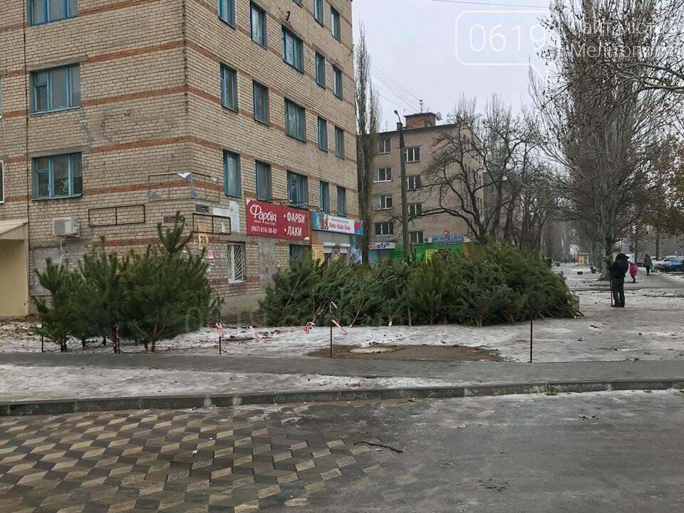 В Мелитополе начали продавать первые елки , фото-1
