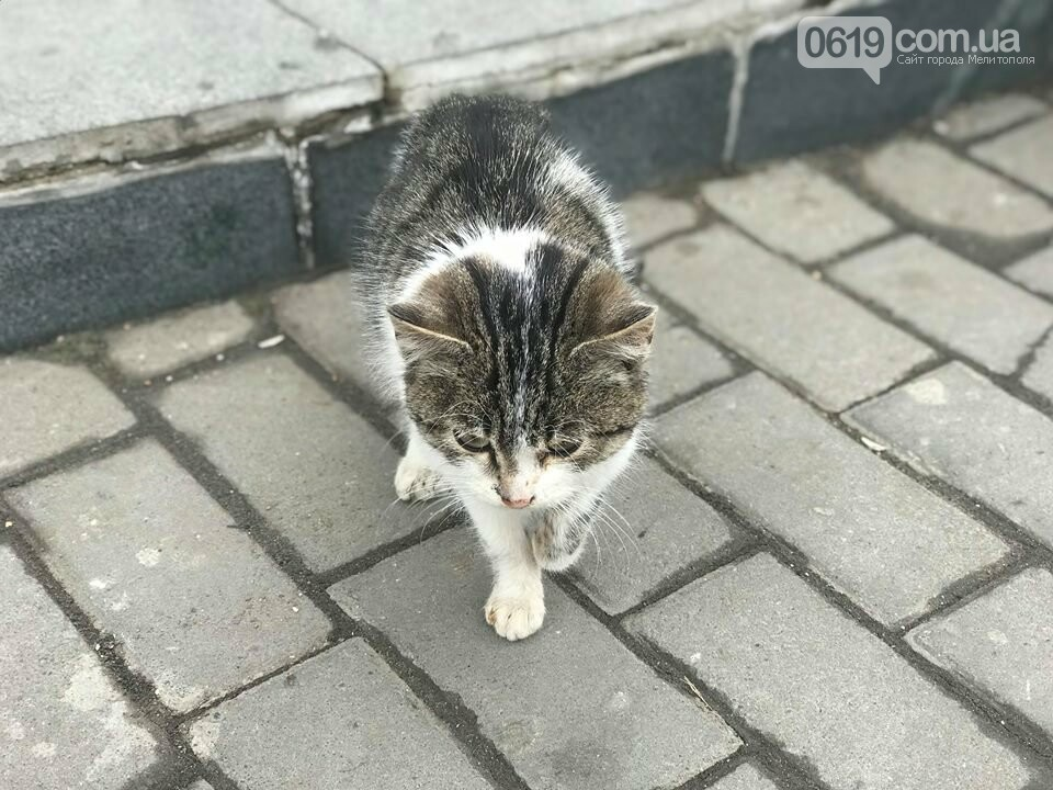 В Мелитополе голодный котенок замерзает на улице, - ФОТО, фото-3, Фото сайта 0619