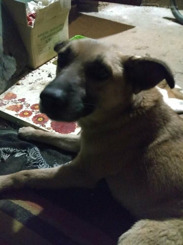 Собаке, которую сбила машина, нужны препараты для лечения и заботливые хозяева, фото-1