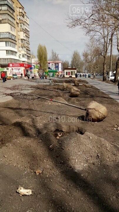 На микрорайоне вместо спиленных тополей высаживают новые деревья , фото-1, Фото сайта 0619