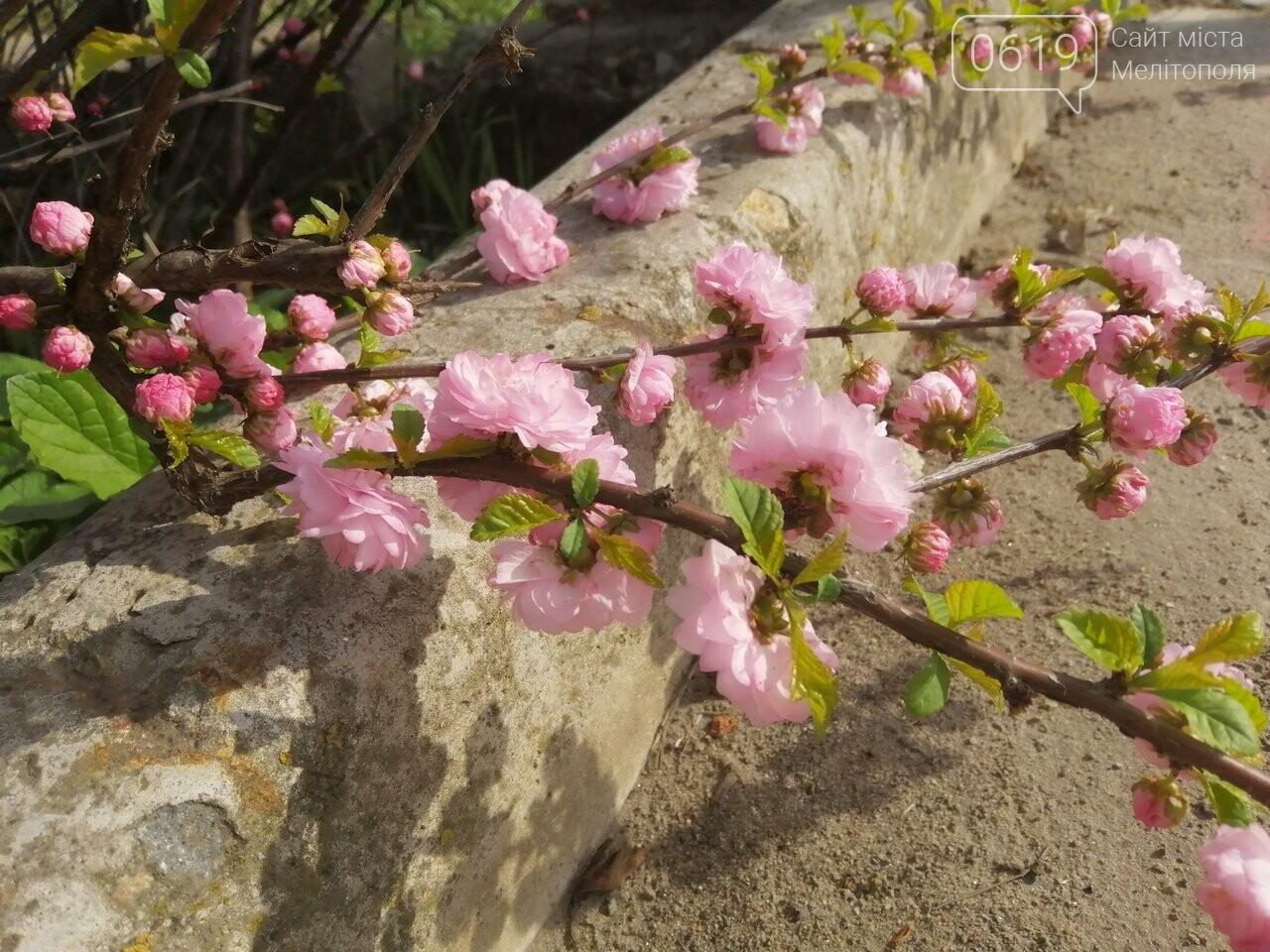 В Мелитополе расцвели майские розы, фото-4, Фото сайта 0619