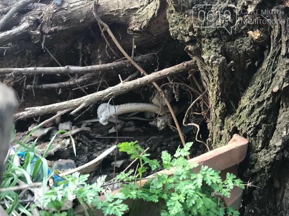 Мелитопольцы рассказали, как им живется в Кизиярской балке, фото-4, Фото предоставлены сайту 0619