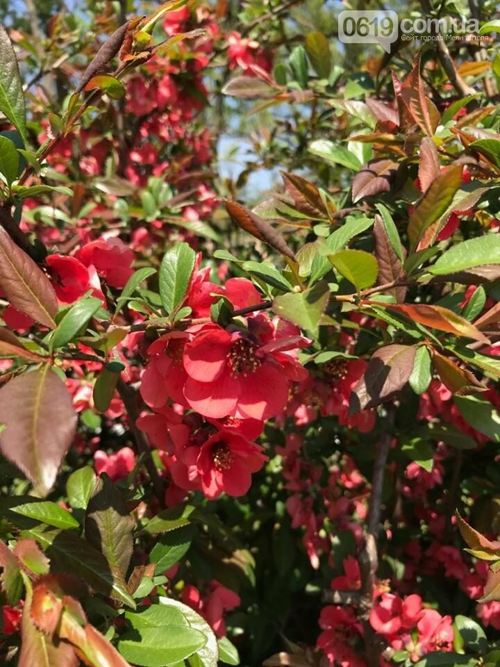 Буйство красок: улицы Мелитополя пестрят весенними цветами, фото-2, Фото сайта 0619