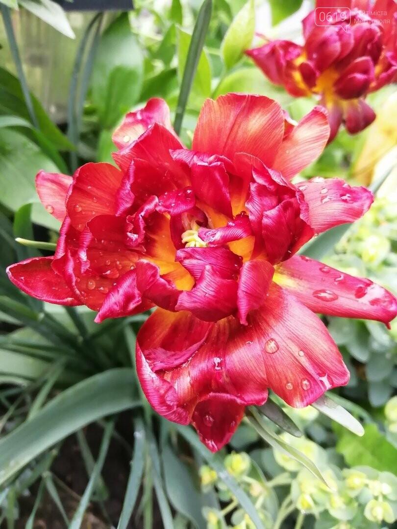 Буйство красок: улицы Мелитополя пестрят весенними цветами, фото-10, Фото сайта 0619